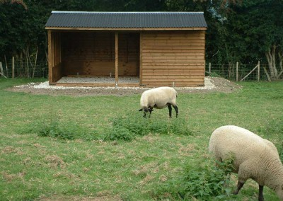 Purpose built mobile shelter with feathedge cladding giving a more rustic appearance. Mounted on a natural chalk base which has been levelled thus keeping the floor high and dry but firm, not too hard. Ideal for ewe !