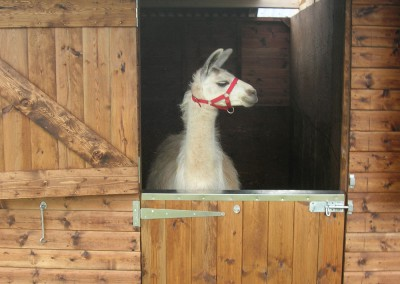 See the Llamas at Ashdown Forest Llama Park. Easily adapted stable doors for various applications. We supply lots of stable doors and frames, made to size, for refurbishment projects.