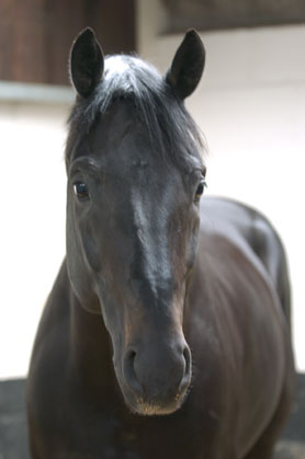 Oldencraig horse